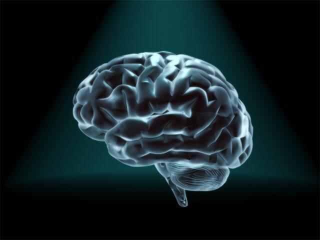 مغز چگونه از خاطرات محافظت می نماید؟