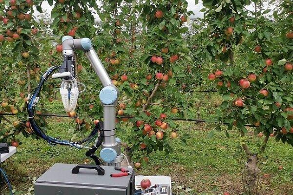 فراوری رباتی که با سرعت انسان میوه می چیند