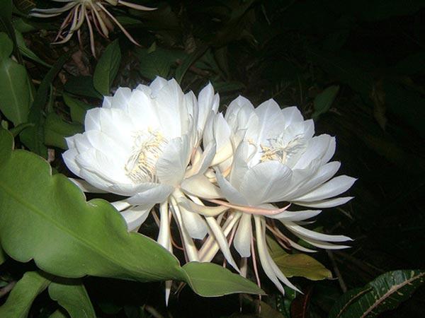 گران قیمت ترین گل های دنیا